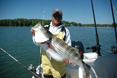 Big Stripers