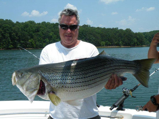smith mountain lake striper fishing guide and charter